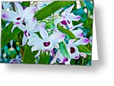 White And Purple Orchids In Greenhouse At Pilgrim Place In Claremont-california Greeting Card