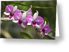 White And Purple Orchids Greeting Card