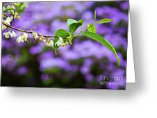 White And Purple Spring Greeting Card