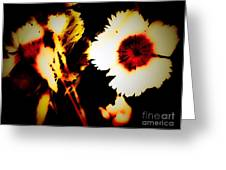 White And Red Dianthus Greeting Card