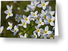 White And Yellow Blossoms Greeting Card