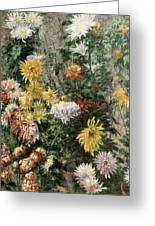 White And Yellow Chrysanthemums In The Garden At Petit Gennevilliers Greeting Card