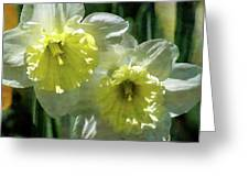 White And Yellow Daffodil 8887 Idp_2 Greeting Card