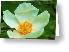 White And Yellow Flower Greeting Card