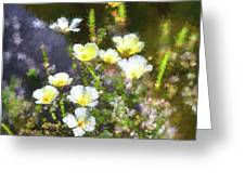 White And Yellow Poppies Abstract 2   Greeting Card