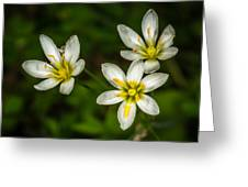 White And Yellow Wild Flowers Greeting Card