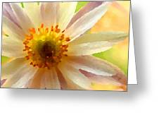 White Anemone Flower Greeting Card