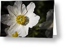 White Anemone Greeting Card