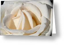 White Angel Rose Greeting Card