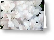 White Azaleas 1 Greeting Card