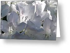 White Azaleas 2 Greeting Card