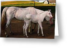 White Baby Horse Greeting Card