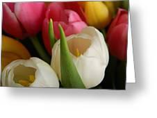 White Balance In Spring Greeting Card