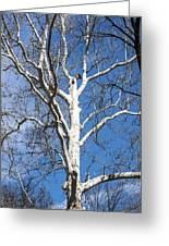 White Bark Greeting Card