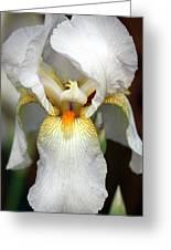 White Bearded Iris 2 Greeting Card