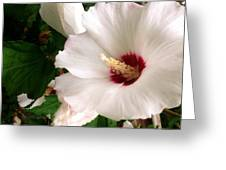 White Beauties  Greeting Card