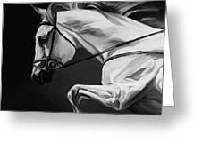 White Beautiful Horse B And W Greeting Card