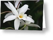 White Beauty Dove Greeting Card