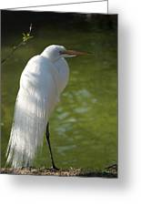 White Beauty Of The Marsh Greeting Card