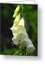 White Bells Greeting Card