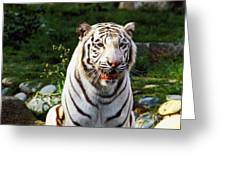 White Bengal Tiger  Greeting Card by Garry Gay