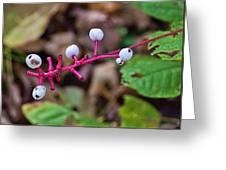 White Berries - Kettle Moraine 10-14-16 Greeting Card