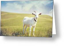 White Billy Goat Greeting Card
