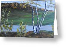 White Birch In The Landscape Greeting Card