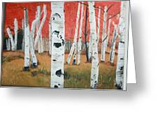 White Birches Greeting Card