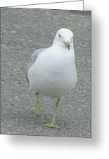 White Bird Of Alberta Greeting Card