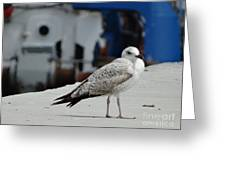 White Bird Port Burgas Greeting Card