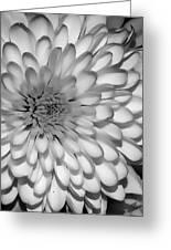 White Bloom Greeting Card