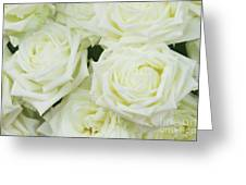 White Blooming Roses Greeting Card