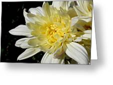 White Blossom Of Radiance Greeting Card