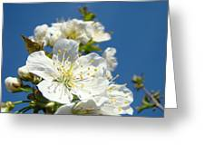 White Blossoms Art Prints Spring Tree Blossoms Canvas Baslee Troutman Greeting Card