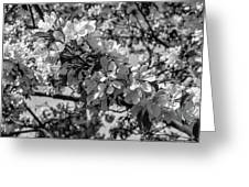 White Blossoms In Black And White Greeting Card