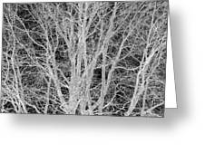 White Branches Greeting Card