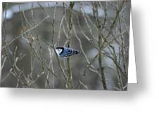 White Breasted Nuthatch 3 Greeting Card