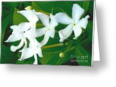 White Bridal Flowers Greeting Card