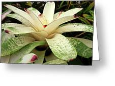 White Bromeliad Greeting Card
