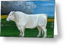 White Bull Greeting Card