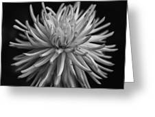 White Burst Greeting Card
