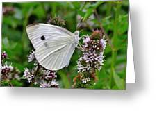 White Butterfly At The Good Earth Market Greeting Card