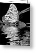 White Butterfly Bw Greeting Card