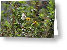 White Butterfly On Golden Daisy Greeting Card