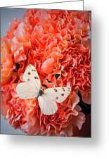 White Butterfly On Pink Carnations Greeting Card