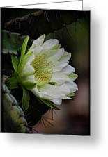 White Cactus Flower  Greeting Card