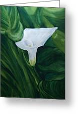 White Calla Greeting Card