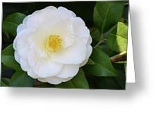 White Camellia Greeting Card
