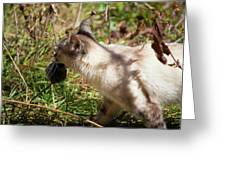 White Cat On The Hunt  Greeting Card